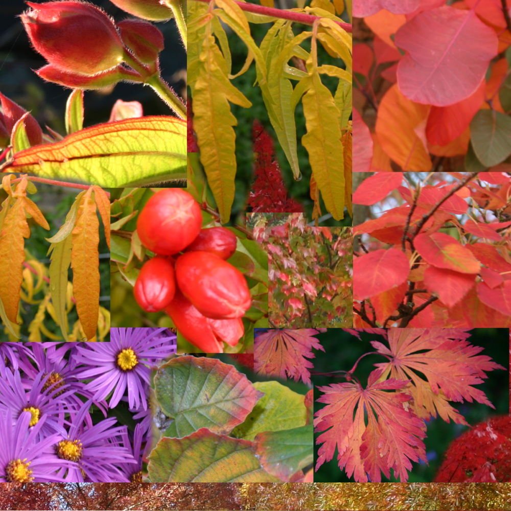 autumn inspiration from nature